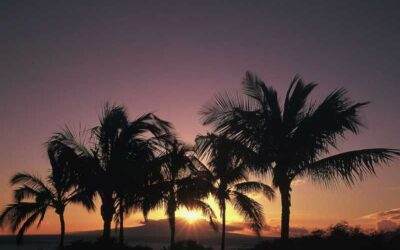 Maui Hotel Room Rates and Occupancy Up