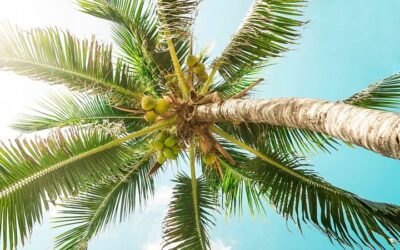 Retire in Hawaii – Pros and Cons of Retiring in Paradise