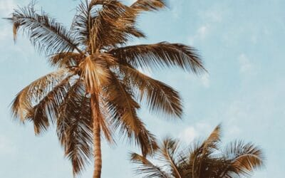 Condos for Sale at the Kapalua Ridge Villas in Maui Hawaii