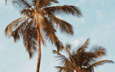 Buy Your Dream Home on Maui at the Ritz Carlton Kapalua