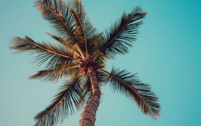 Luxury Real Estate in Paradise: Kapalua Ironwoods 72, Hawaii